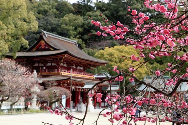 太宰府天満宮で香しい梅を愛で、...