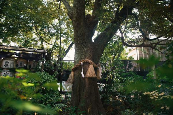 そんな東京大神宮には、女心をくすぐる可愛いデザインの授与品がいっぱい!その中でも人気なのは「縁結び鈴蘭守り」です。鈴蘭と神社の社紋がモチーフとなったお守り
