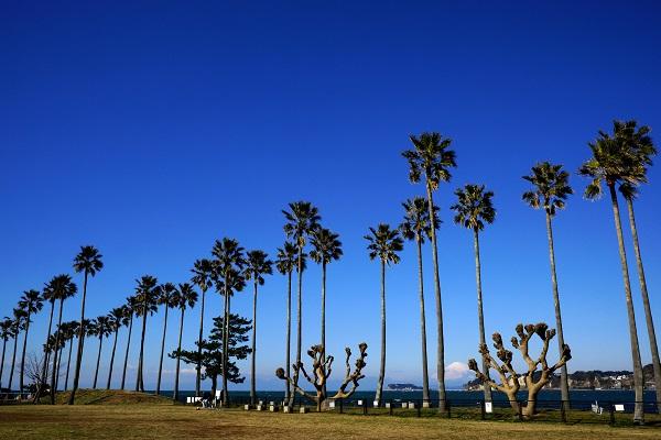 どちらの公園にも背の高いヤシの木が植えられていて、撮影にオススメです。