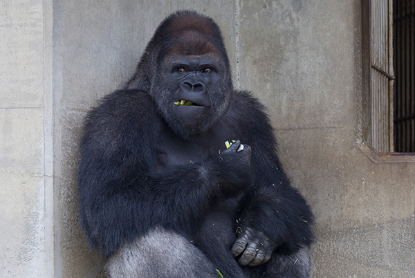 東山動植物園」は、愛知県民から愛されている人気スポット。今回は有名なイケメンゴリラ 「シャバーニ」を始め、たくさんの動物たちに会って、癒されてきました。