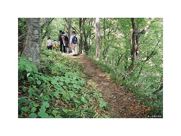 亀割峠の新緑と紅葉│観光・旅行...